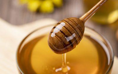 honey-wild-bee-4770245.jpg